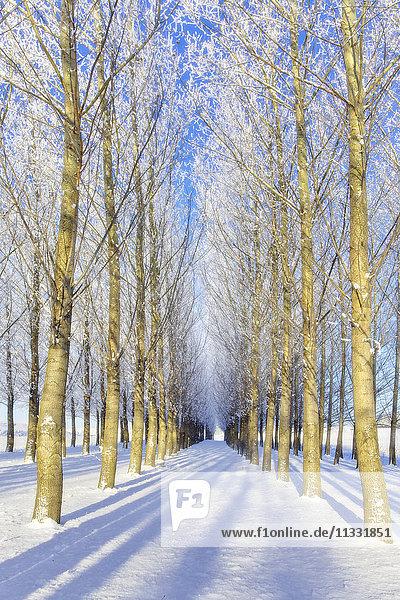 trees in winter near Colfax  Washington State