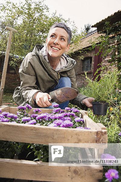 Glückliche Frau  die Blumen im Garten pflanzt.