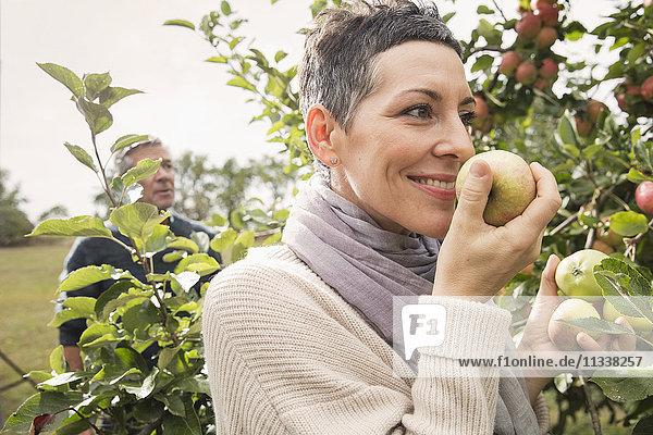 Frau riecht frischen Apfel im Obstgarten