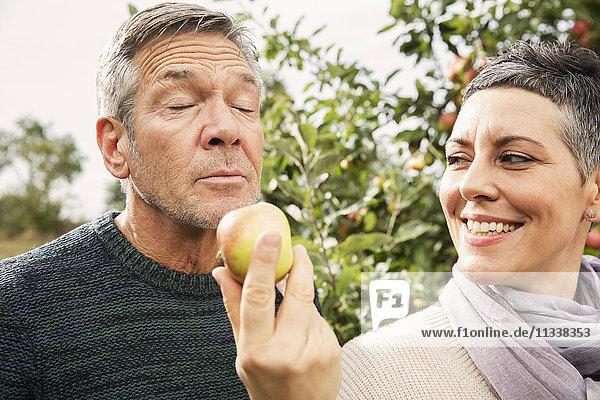 Frau hält den Apfel für den Mann im Obstgarten bereit
