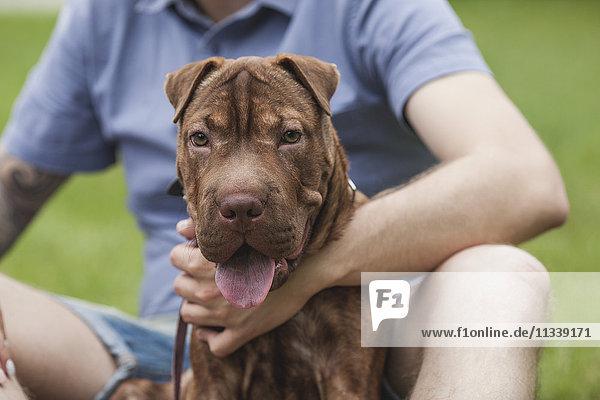 Ein Shar-pei/Staffordshire Terrier Mix  der mit seinem Besitzer in einem Park sitzt.
