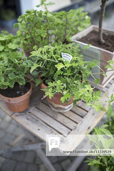 Hochwinkelansicht von Topfpflanzen auf Holztisch im Hintergarten