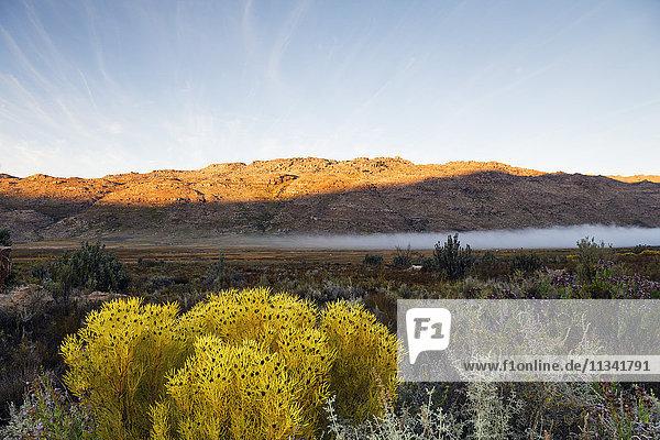 Cederberg Wilderness Area  Western Cape  South Africa  Africa