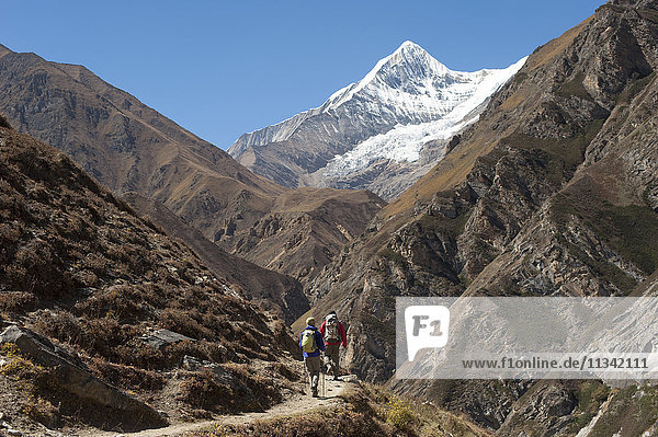 Trekking in the Kagmara Valley in the remote Dolpa region  Himalayas  Nepal  Asia