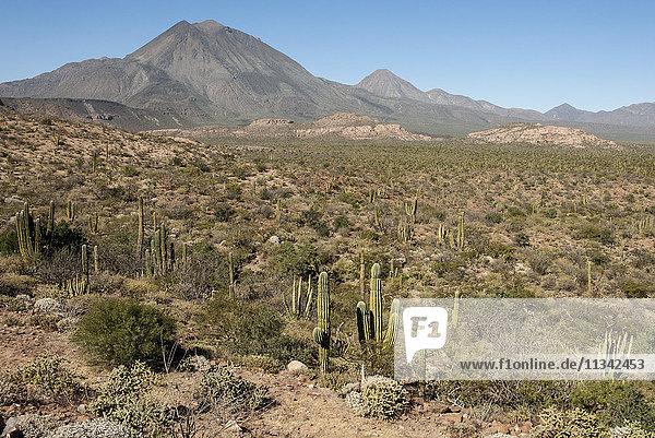 Volcan las Tres Virgenes  Santa Rosalia  Baja California  Mexico  North America