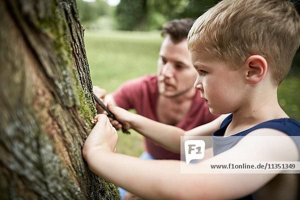 Vater und Sohn untersuchen einen Baumstamm