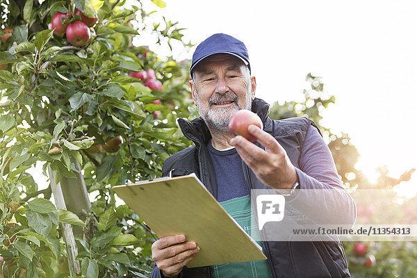 Männlicher Landwirt mit Klemmbrett  der Äpfel im Obstgarten inspiziert Männlicher Landwirt mit Klemmbrett, der Äpfel im Obstgarten inspiziert