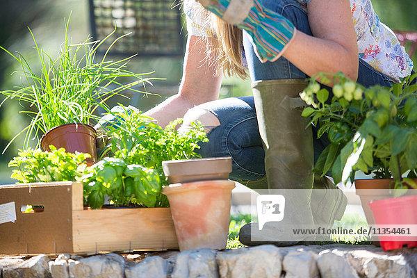 Schrägansicht einer Frau  die im Garten Kräuterpflanzen vorbereitet