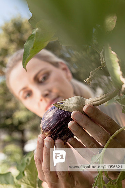 Mature woman inspecting vegetables growing in garden  close-up