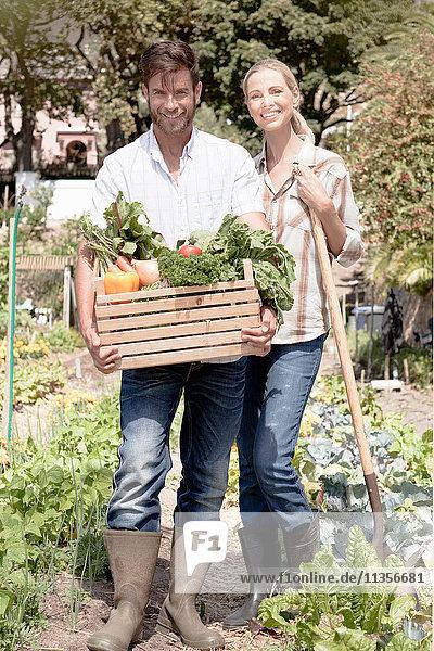 Porträt eines reifen Paares im Garten  das eine Kiste mit frischem Gemüse hält
