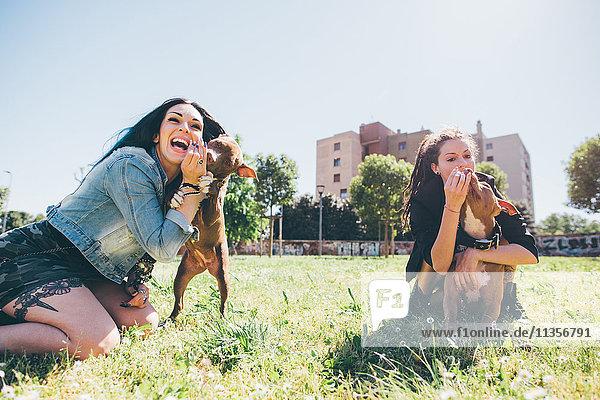Zwei junge Frauen spielen mit Pitbull-Terriern im Stadtpark