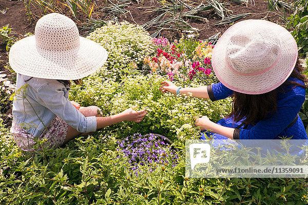 Zwei Frauen mit Sonnenhüten  Pflanzenpflege  Draufsicht