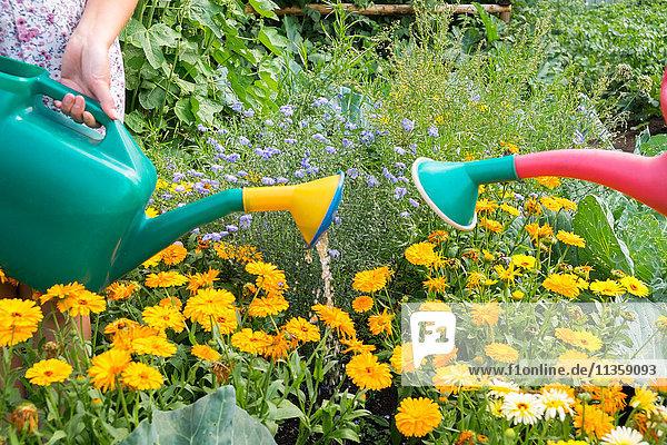 Weibchen gießt mit der Gießkanne Pflanzen  Nahaufnahme