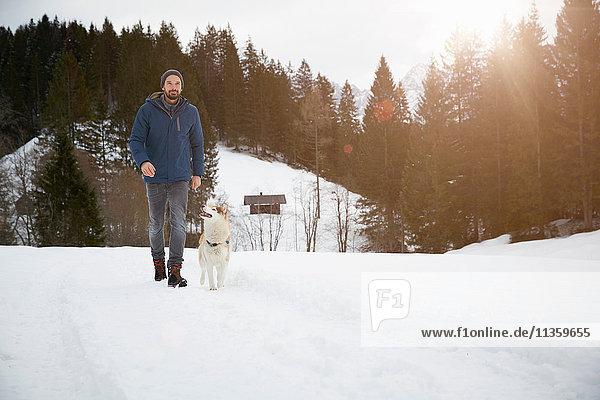 Man walking dog on snow covered landscape  Elmau  Bavaria  Germany