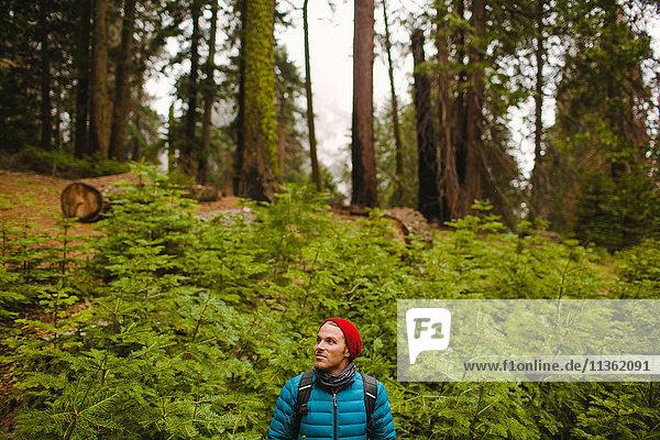 Wanderer im Sequoia-Nationalpark  Kalifornien  USA