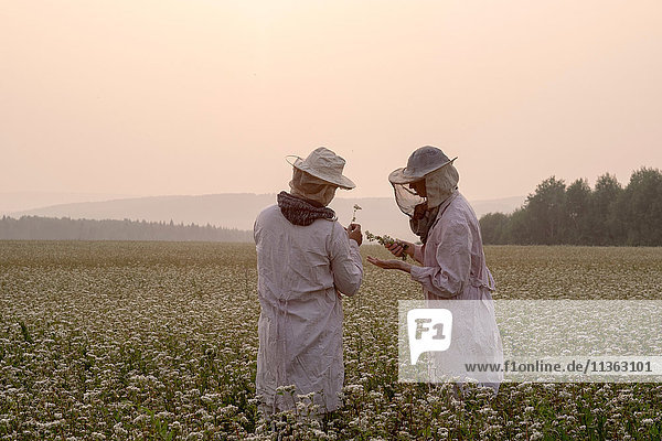 Imker und Imkerinnen inspizieren Pflanzen im Blumenfeld  Ural  Russland