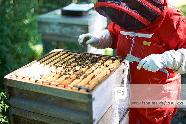 Imker untersucht Bienenstock
