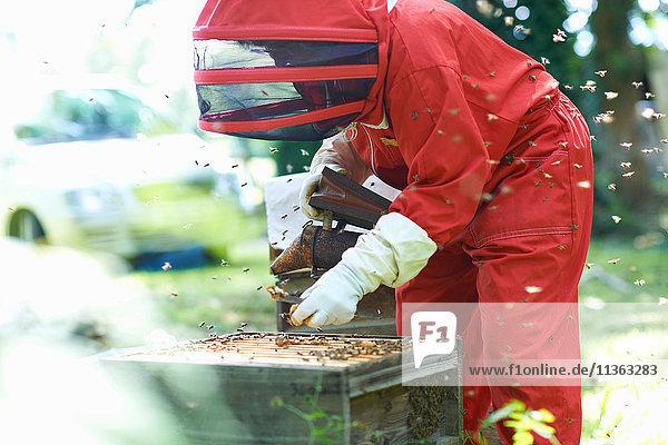 Imker im Bienenstock  umgeben von Bienen