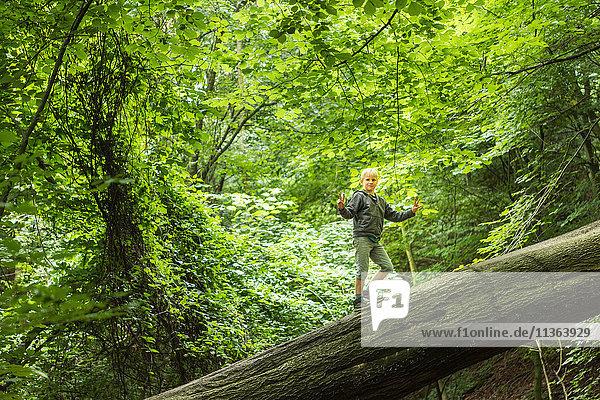 Junge im Wald balanciert auf umgestürztem Baum