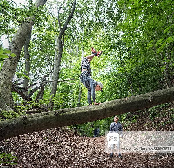 Junge im Wald macht Handstand auf umgefallenem Baum