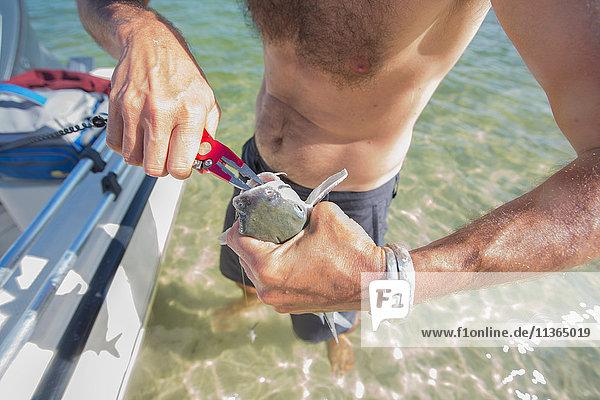 Mann zieht Haken aus dem Fischmaul  nachdem er gefangen wurde  Mittelabschnitt  Fort Walton Beach  Florida  USA