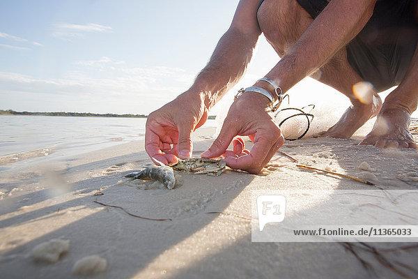 Mann befreit Krabben und Fische aus dem Netz  Fort Walton Beach  Florida  USA