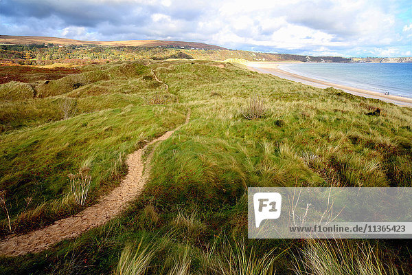 View of Oxwich bay from the dunes  Gower  Wales