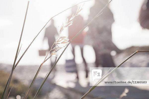 Flacher  sonnenbeschienener Blick auf junge erwachsene Freunde beim Strandspaziergang am Strand  Western Cape  Südafrika