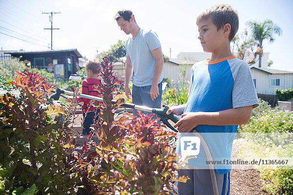 Junge mit Bruder und Vater beim Sprühen von Pflanzen im Kleingarten