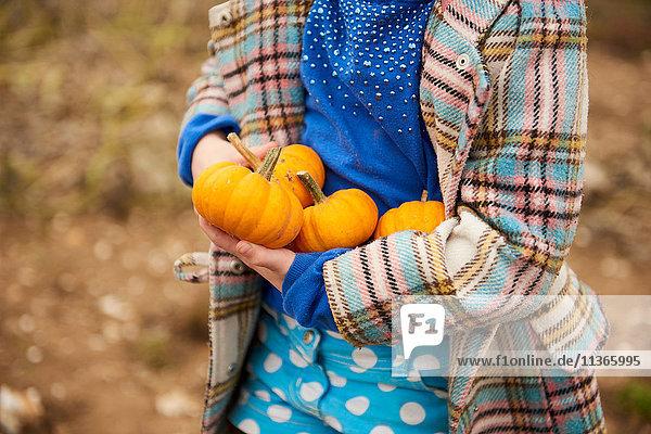 Mittelteil eines Mädchens  das Kürbisse im Kürbisfeld trägt