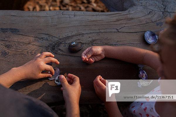 Kinder spielen mit Muscheln auf Baumstämmen