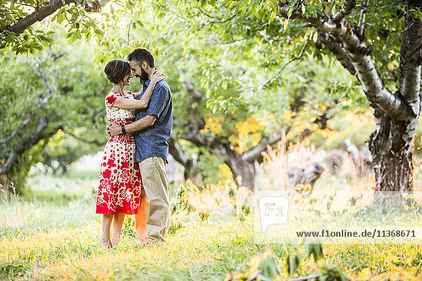 Couple embracing in cherry orchard