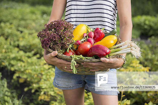Midsection of a woman with vegetable basket in community garden