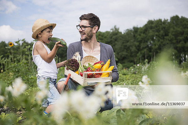 Mid adult man with his son harvesting vegetables in community garden