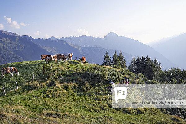 Two mountain biker friends riding on uphill  Zillertal  Tyrol  Austria