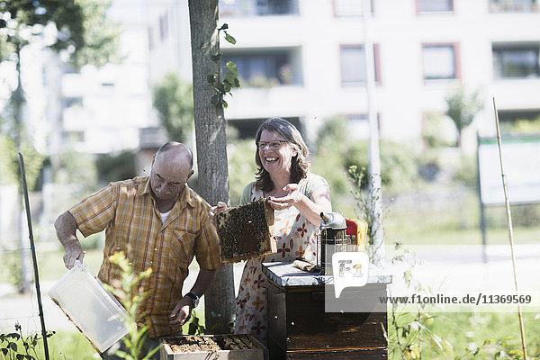 Beekeepers looking at honeycomb