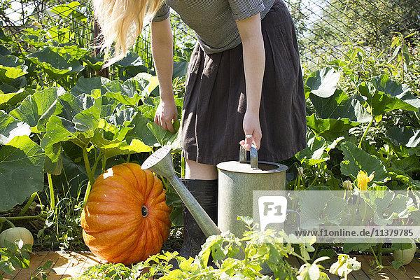 Caucasian woman carrying watering can in garden near pumpkin