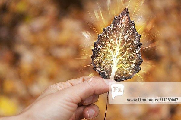 Eine Hand hält ein Herbstblatt mit einem leuchtenden Baum darin  Lebenszyklus  spirituelles Konzept