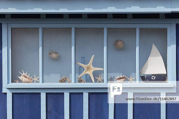 Fenster mit Seesternen  maritime Dekoration an einer Austernfischer-Hütte  Le Site ostréicole et naturel de Fort Royer  Île d?Oléron  Insel Oleron  Insel Oleron  Charente-Maritime  Frankreich  Europa