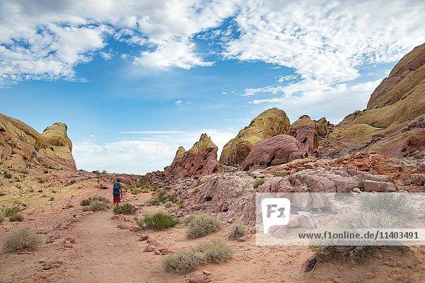 Junger Mann  Wanderer auf White Dome Trail  Rot orange Felsformation  Valley of Fire State Park  Mojave Wüste  Nevada  USA  Nordamerika