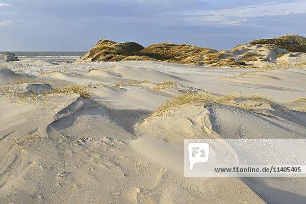 Weiße Dünen  Nordsee  Amrum  Nordfriesische Insel  Nordfriesland  Schleswig-Holstein  Deutschland  Europa
