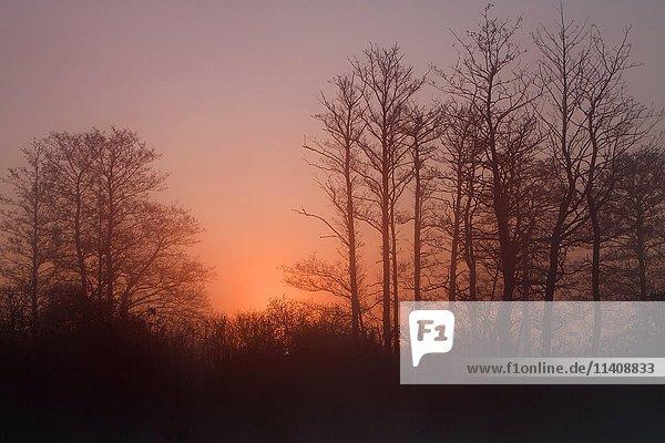 Foggy atmosphere  sunset  Peenetal Nature Park  Mecklenburg-Western Pomerania  Germany  Europe