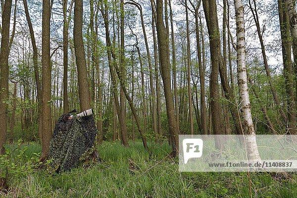 Getarnter Naturfotograf im Wald  Müritz-Nationalpark  Mecklenburg-Vorpommern  Deutschland  Europa