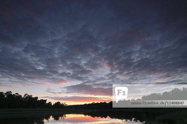 Evening in the Kliekener Aue  Middle Elbe Biosphere Reserve  Dessau  Saxony-Anhalt  Germany  Europe