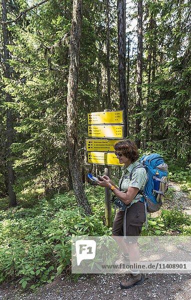 Wanderin bei Wegweiser im Wald liest Karte auf GPS Gerät  Schladminger Tauern  Schladming  Steiermark  Österreich  Europa