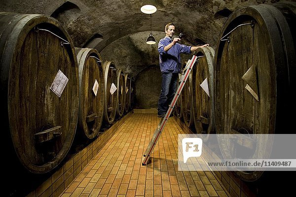 Wine cellar  winemaker checking ripeness of wine  Kiechlinsbergen  Baden-Wuertemberg  Germany  Europe Wine cellar, winemaker checking ripeness of wine, Kiechlinsbergen, Baden-Wuertemberg, Germany, Europe