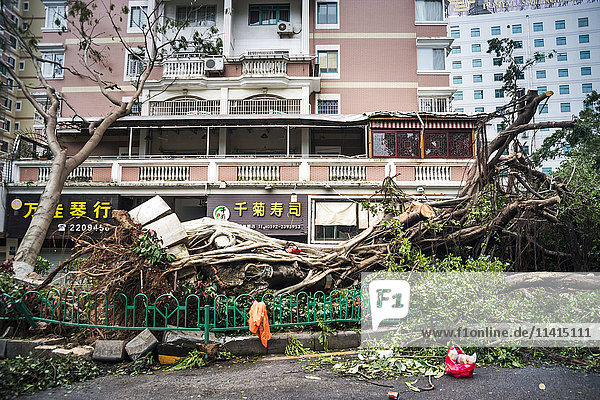 'A few hours after super typhoon Merapi passed through Xiamen  it generated mass damage throughout the city; Xiamen  Fujian province  China'