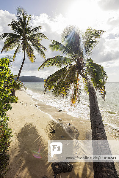 'Two Palm Trees On The Beach With Sun Flare; St. Croix  US Virgin Islands'