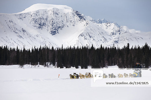 Melissa Owens Stewart runs on the trail arriving at the Finger Lake checkpoint during the 2016 Iditarod  Alaska.