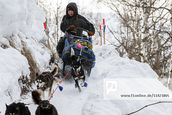 Mike Williams Jr. handles his sled on the last leg of the Happy River steps during the 2016 Iditarod Trail between the Finger Lake and Rainy Pass Checkpoints  Alaska.